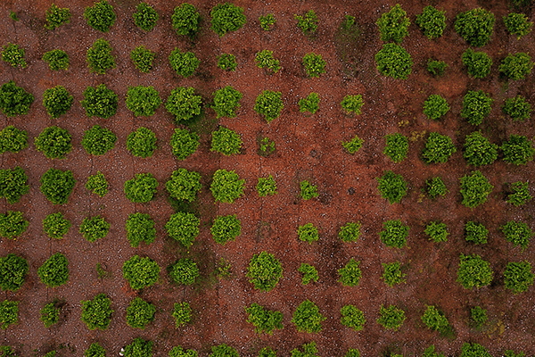 Fasi agricole riprese drone