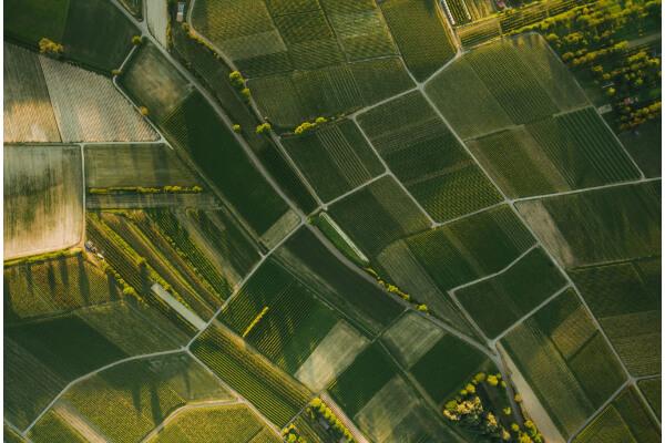 Agricoltura e drone Drone Pro Service