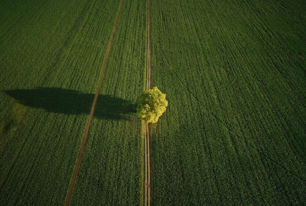 Droni in agricoltura Drone Pro Service
